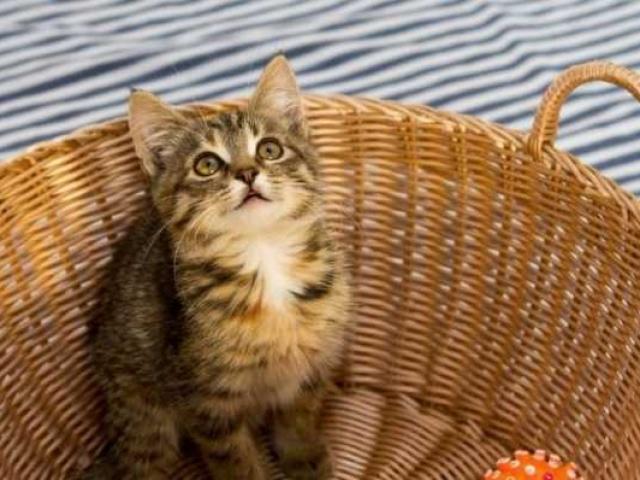 Делать добро: Mamba и Teddy Food приглашают помочь бездомным котикам